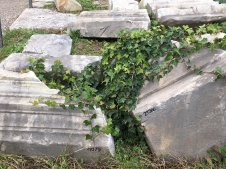 Ivy growing on ancient ruins