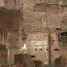 Roman Forum ruins, and a seagull