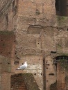 Seagull taking in the Roman Forum ruins