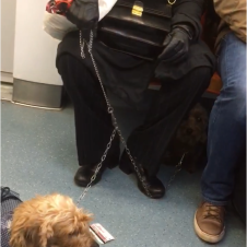 Also on the train were there two adorable dogs